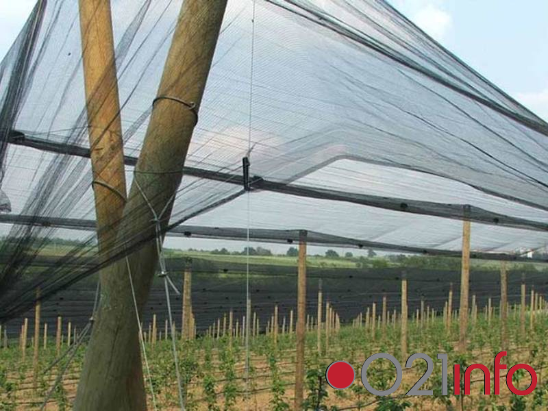 Raspisani konkursi za sufinansiranje investicija voćara, vinogradara i stočara u Vojvodini